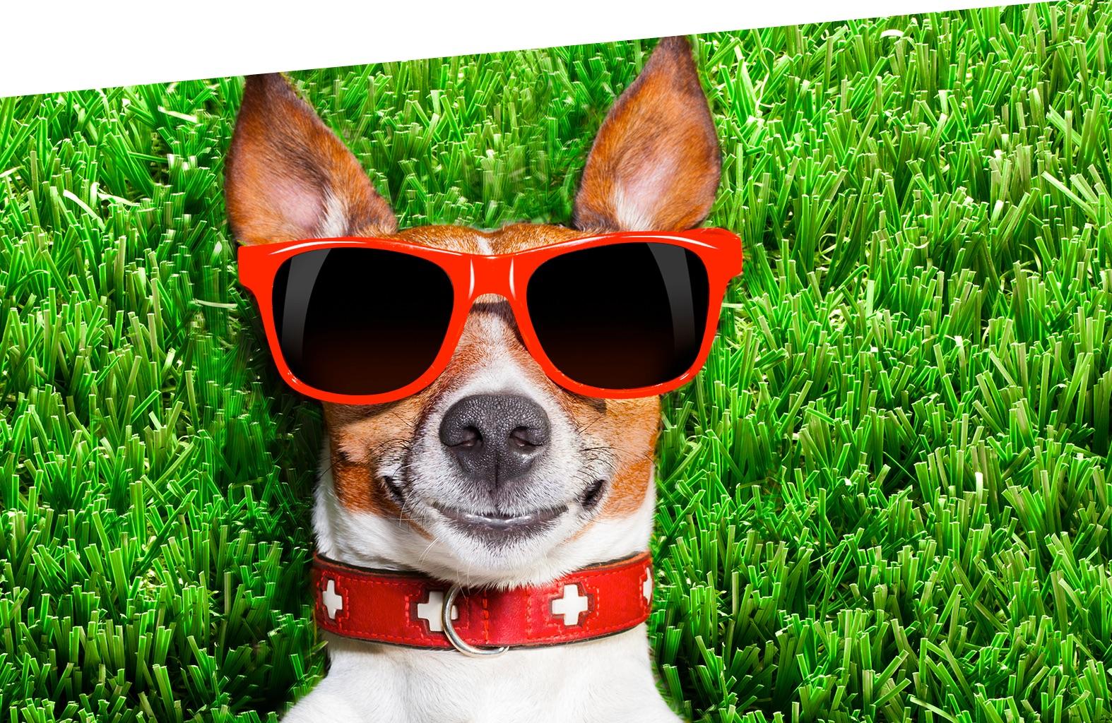 Dog Park Hotel Thalas Club - In vacanza con il tuo amico a 4 zampe