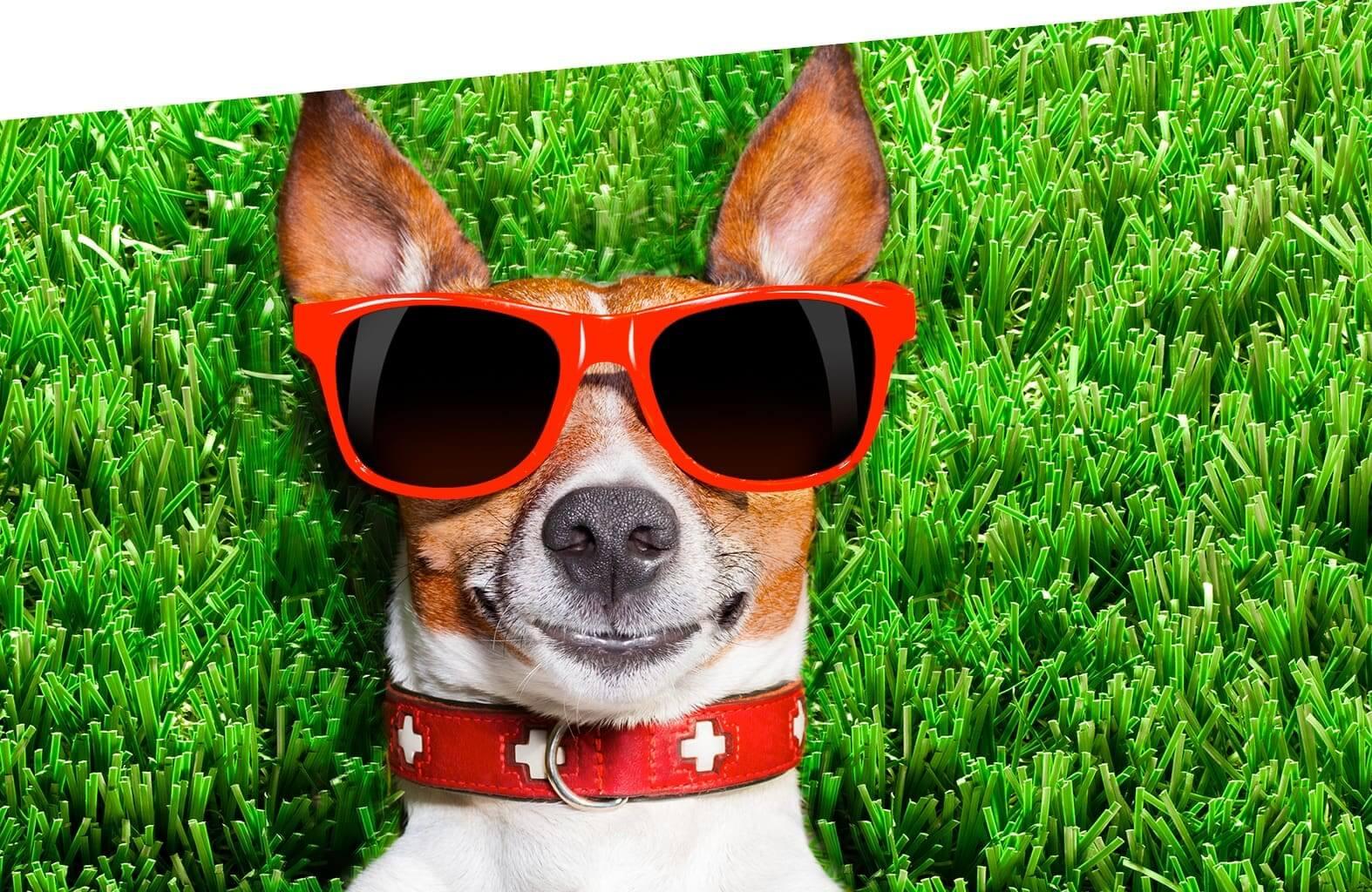 Dog Park Villaggio Thalas Club - In vacanza con il tuo amico a 4 zampe